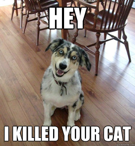 hey i killed your cat   overly attached dog   quickmeme
