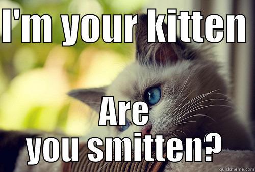 Smitten Kitten Quickmeme