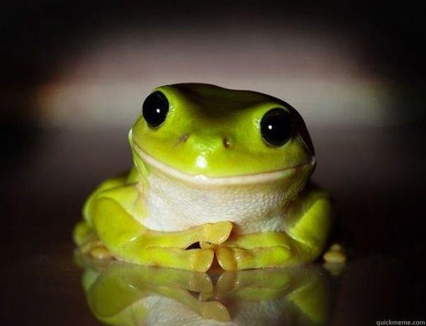 Fascinated Frog