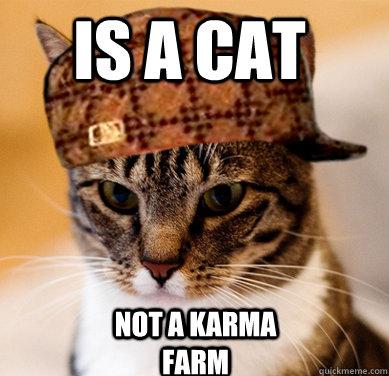 is a cat not a karma farm - is a cat not a karma farm  Scumbag Cat