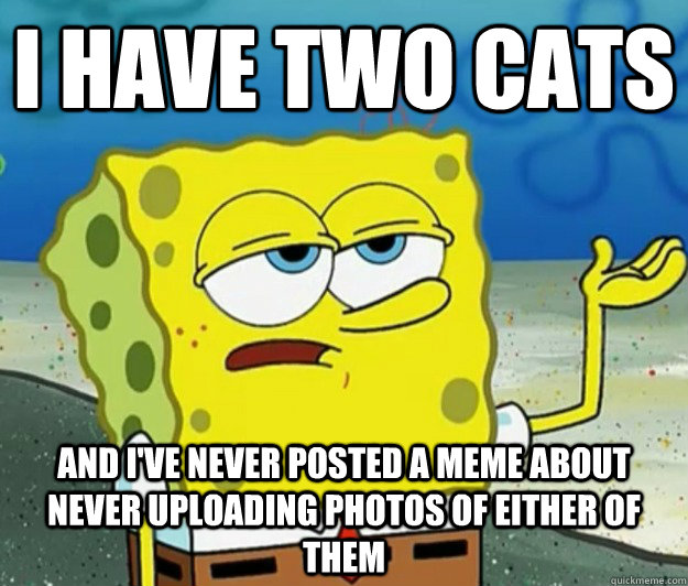I have two cats And I've never posted a meme about never uploading photos of either of them - I have two cats And I've never posted a meme about never uploading photos of either of them  Tough Spongebob