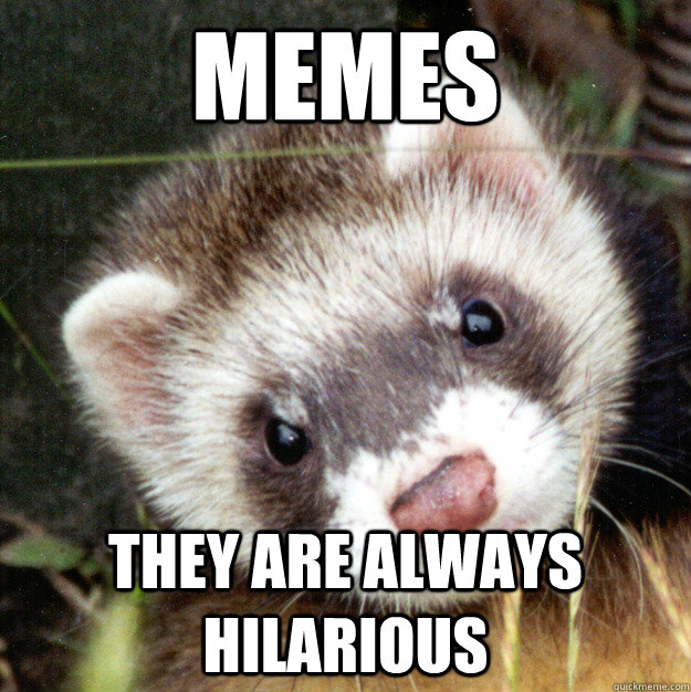 MEMES They are always hilarious - MEMES They are always hilarious  Inaccuracy Ferret