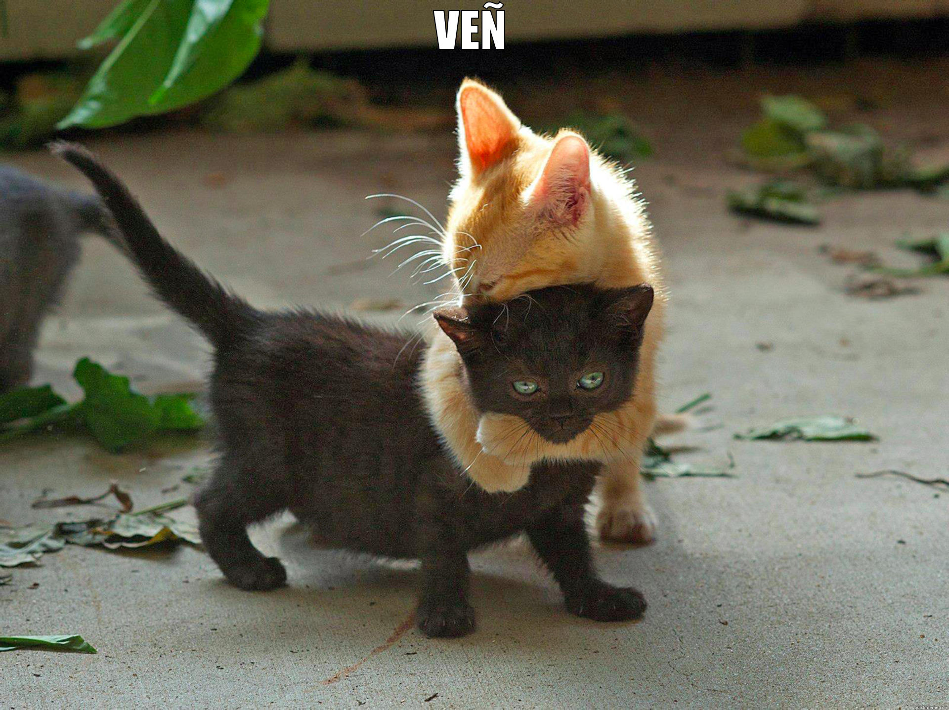 ven chat