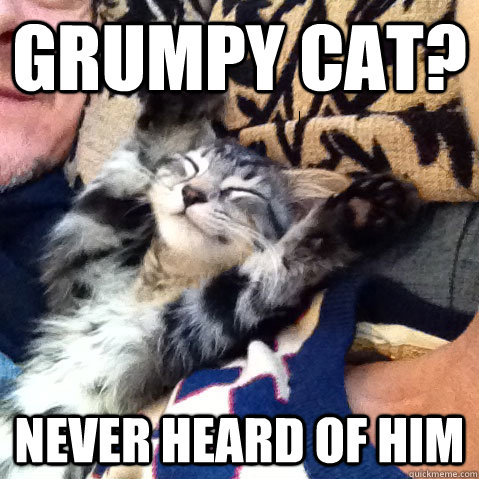 happy cat memes - photo #17