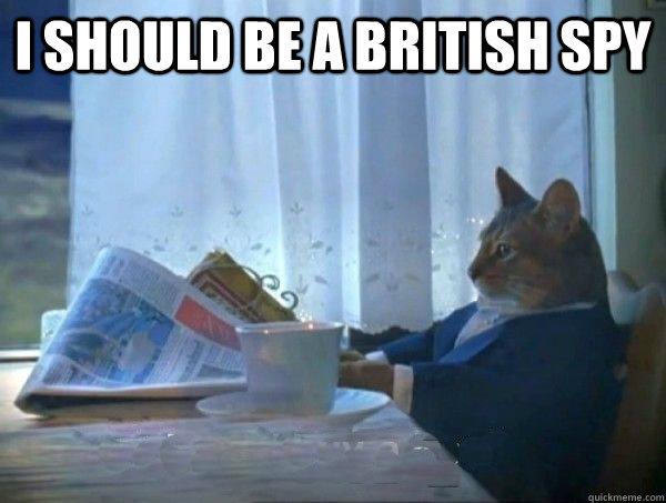 I should be a british spy  - I should be a british spy   morning realization newspaper cat meme