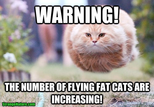 Warning! The number of flying fat cats are increasing!  Fat Cat