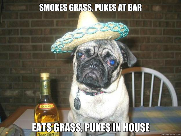 smokes grass, pukes at bar eats grass, pukes in house