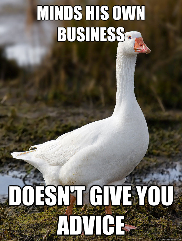 minds his own business doesn't give you advice - minds his own business doesn't give you advice  Good Guy Goose
