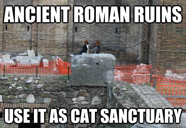 ancient roman ruins use it as cat sanctuary   scumbag cat