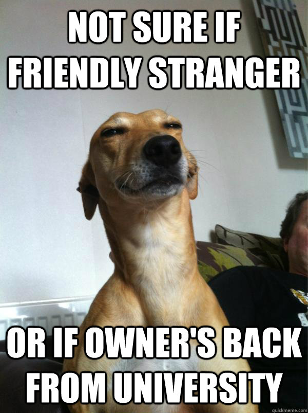 Not sure if friendly stranger Or if owner's back from university