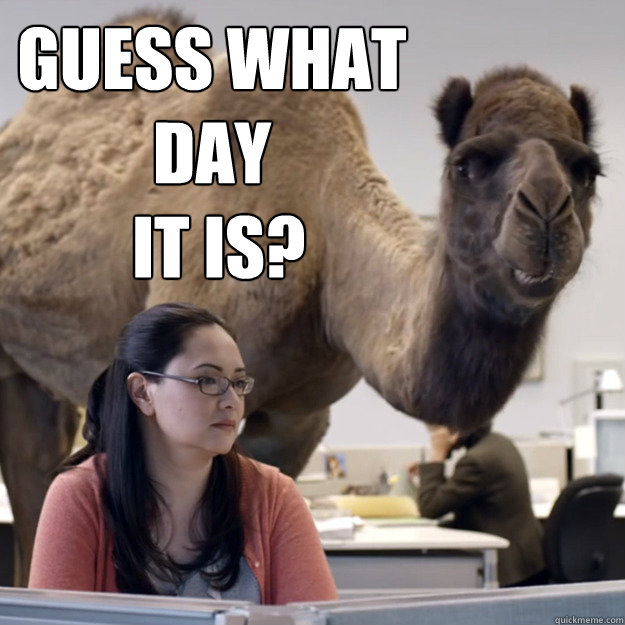 guess what day  it is?  hump day