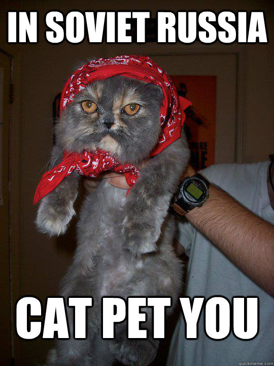 In soviet russia cat pet you