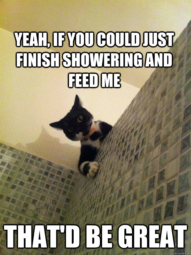 Yeah, if you could just finish showering and feed me That'd be great - Yeah, if you could just finish showering and feed me That'd be great  Incredulous Cat