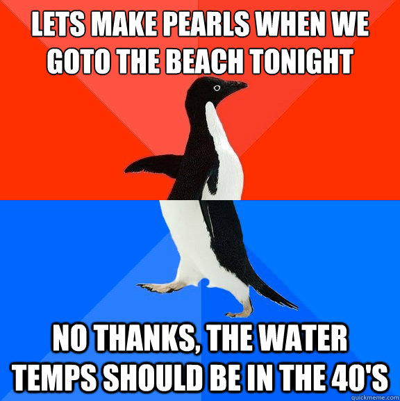 Lets make pearls when we goto the beach tonight no thanks, the water temps should be in the 40's - Lets make pearls when we goto the beach tonight no thanks, the water temps should be in the 40's  Socially Awesome Awkward Penguin