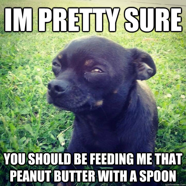 Im Pretty sure You should be feeding me that peanut butter with a spoon - Im Pretty sure You should be feeding me that peanut butter with a spoon  Skeptical Dog