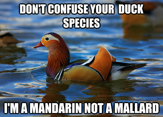 Don't confuse your  duck species I'm a Mandarin not a mallard