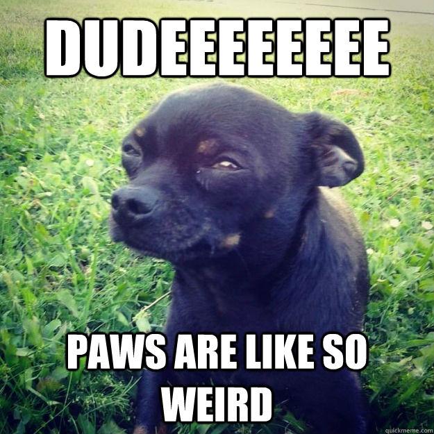 Dudeeeeeeee paws are like so weird - Dudeeeeeeee paws are like so weird  Skeptical Dog