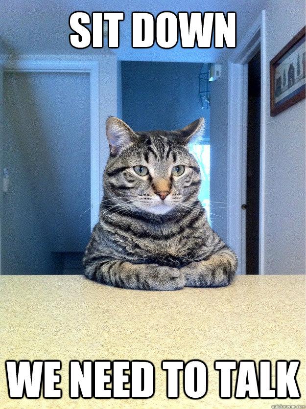 Sit down We need to talk - Sit down We need to talk  Serious Cat