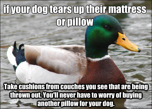 if your dog tears up their mattress or pillow Take cushions from couches you see that are being thrown out. You'll never have to worry of buying another pillow for your dog. - if your dog tears up their mattress or pillow Take cushions from couches you see that are being thrown out. You'll never have to worry of buying another pillow for your dog.  Actual Advice Mallard