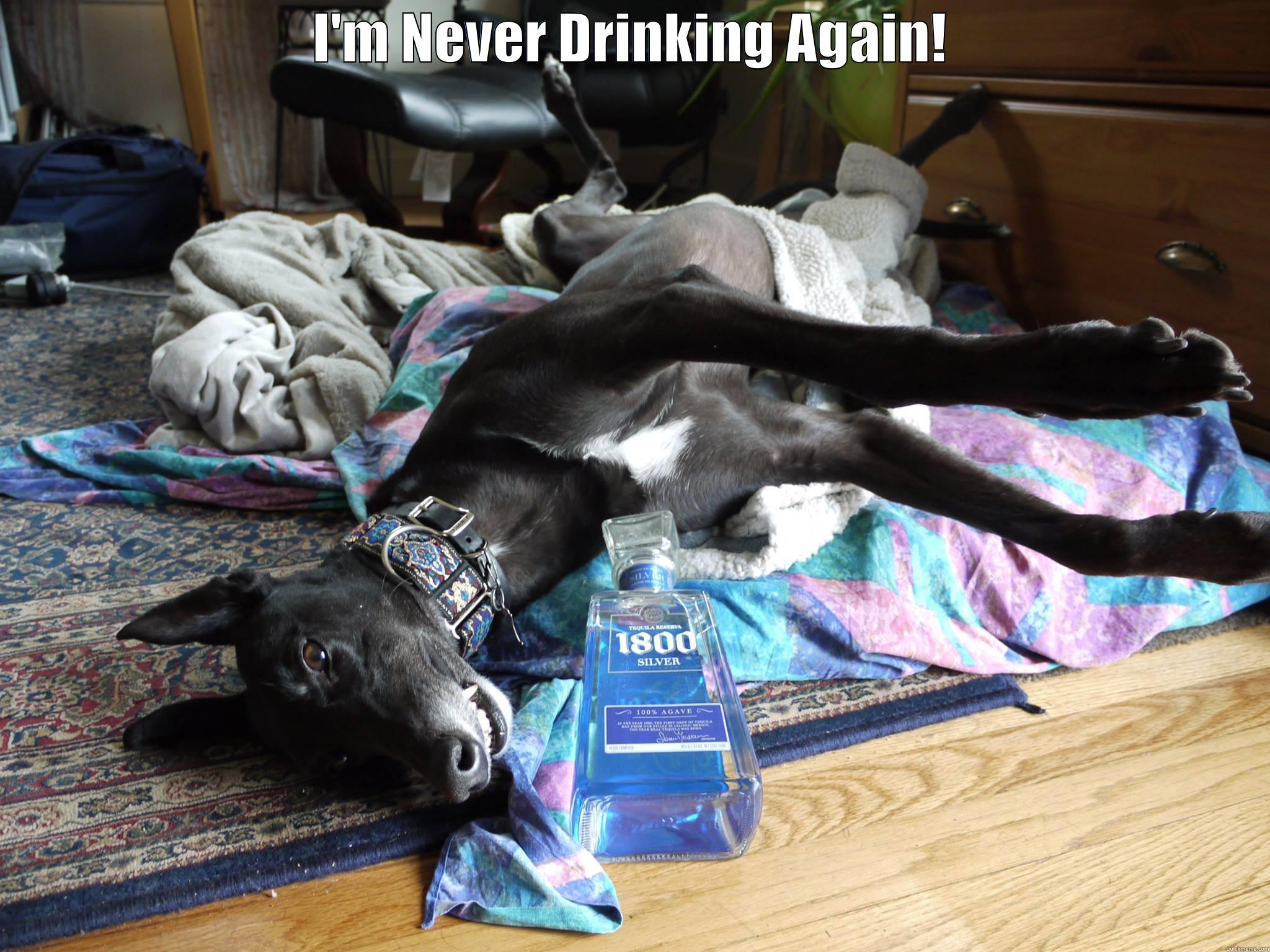 I'M NEVER DRINKING AGAIN!  Misc