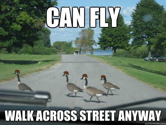 Can fly walk across street anyway  Scumbag Geese