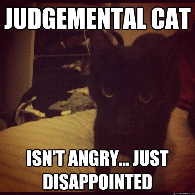 Judgemental Cat isn't angry... just disappointed - Judgemental Cat ...