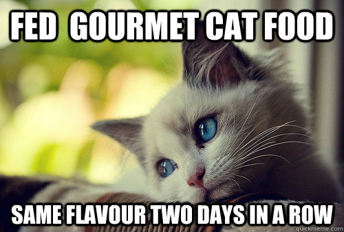 fed  gourmet cat food same flavour two days in a row - fed  gourmet cat food same flavour two days in a row  First World Cat Problems
