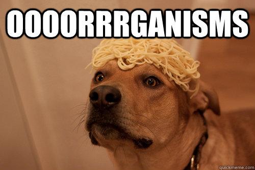 oooorrrganisms  - oooorrrganisms   10 Dog
