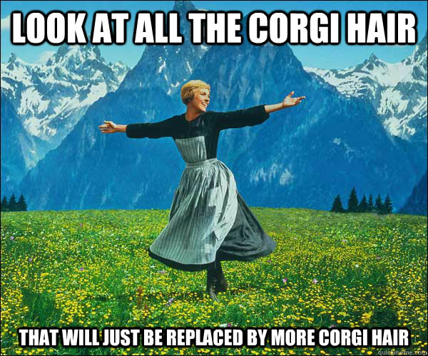 Look at all the corgi hair that will just be replaced by more corgi hair - Look at all the corgi hair that will just be replaced by more corgi hair  Sound of Music
