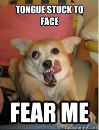 Tongue stuck to face Fear me - Tongue stuck to face Fear me  Derp Dog