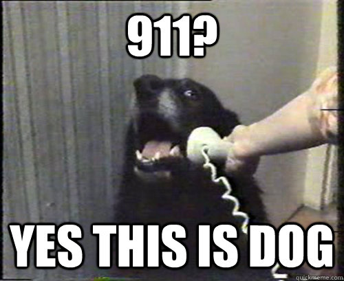 911? Yes this is dog