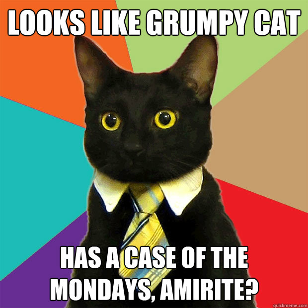 Looks like Grumpy Cat Has a case of the mondays, amirite? - Looks like Grumpy Cat Has a case of the mondays, amirite?  Business Cat