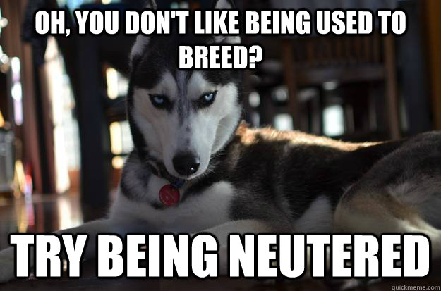 Oh, you don't like being used to breed? TRY BEING NEUTERED  - Oh, you don't like being used to breed? TRY BEING NEUTERED   Condescending Dog