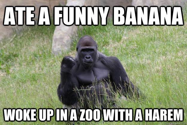 Ate a funny banana Woke up in a zoo with a harem  Success Gorilla