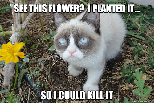 see this flower?  I planted it... so i could kill it