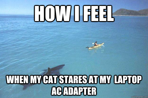 How I FEEL  WHEN MY CAT stares AT MY  LAPTOP AC ADAPTER - How I FEEL  WHEN MY CAT stares AT MY  LAPTOP AC ADAPTER  Chatham shark