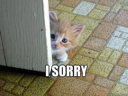 I'm sorry Please forgive me? - Sorry Cat - quickmeme