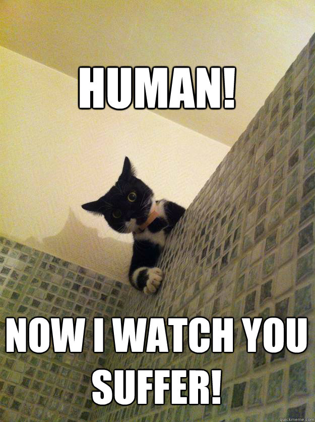 HUMAN! NOW I WATCH YOU SUFFER! - HUMAN! NOW I WATCH YOU SUFFER!  Incredulous Cat