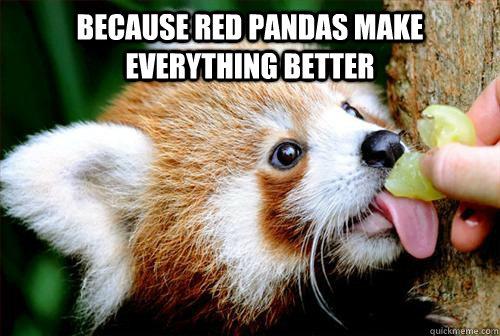 Because Red Pandas make everything better