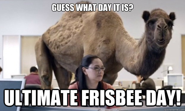 guess what day it is ultimate frisbee day hump day camel quickmeme