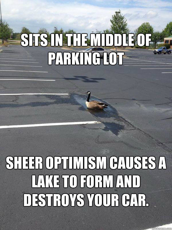 Sits in the middle of parking lot   Sheer optimism causes a lake to form and destroys your car.