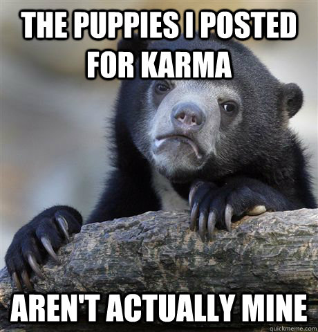The puppies I posted for karma aren't actually mine - The puppies I posted for karma aren't actually mine  Confession Bear