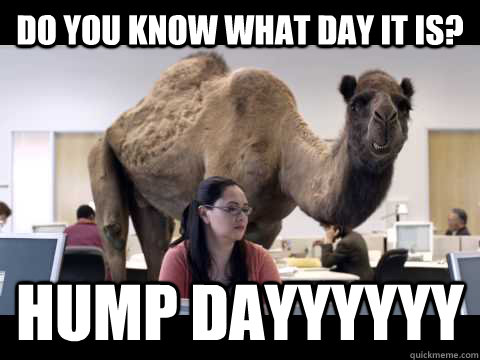Do you know what day it is? Hump dayyyyyy