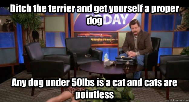 Ron Swanson Cats Are Pointless Gif