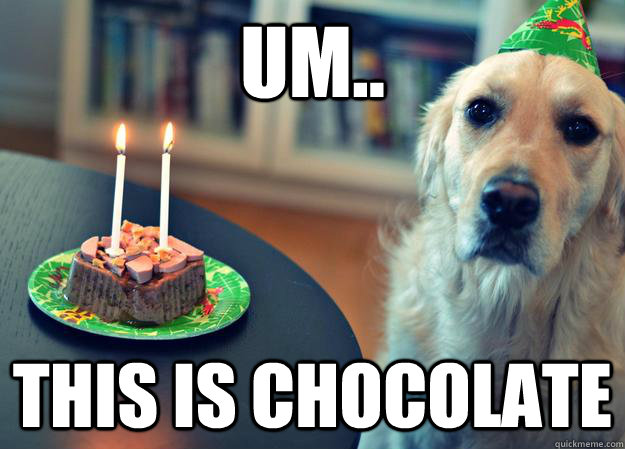 um.. this is chocolate - um.. this is chocolate  Sad Birthday Dog
