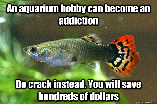 An aquarium hobby can become an addiction Do crack instead. You will save hundreds of dollars  - An aquarium hobby can become an addiction Do crack instead. You will save hundreds of dollars   Universal Truth Guppie