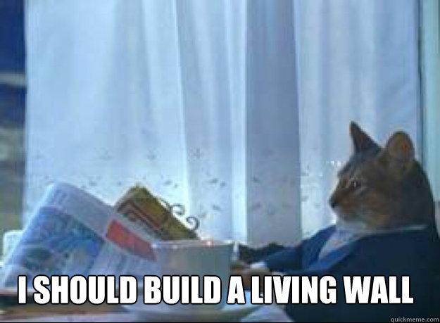 I should build a living wall  - I should build a living wall   I should buy a boat cat