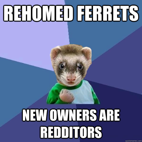 Rehomed Ferrets New owners are redditors - Rehomed Ferrets New owners are redditors  Misc