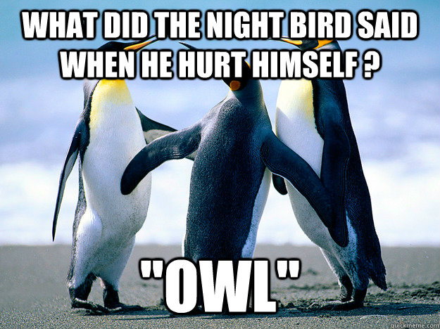 What did the night bird said when he hurt himself ? ''OWL'' - What did the night bird said when he hurt himself ? ''OWL''  Lame Joke Penguins