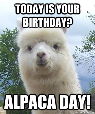 Today is your birthday? Alpaca day! - Today is your birthday? Alpaca day!  Alpaca-pun Alpaca